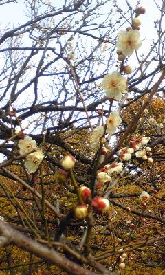 小さい春♪