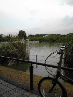 池の向こうは